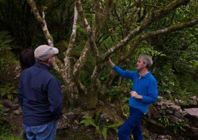 Colman's Well, Rag Tree