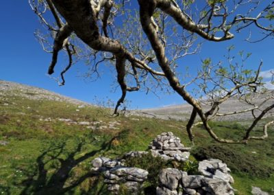 Colmans Well Oughtmama Burren Walk
