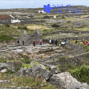 People visiting Inishmaan, Aran Island with Walk with Pius